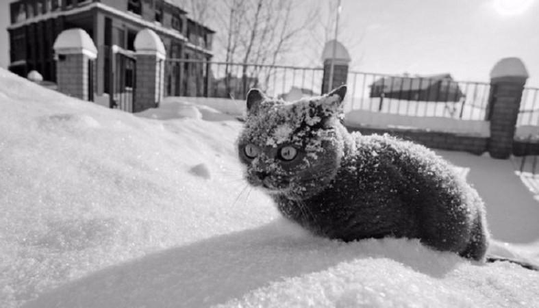 """""""Вдарять морози"""": синоптики попереджають про різке похолодання в Україні"""