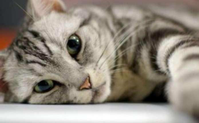 """Маєте домашнього улюбленця? """"Штраф від 5,1 до 20,4 тис. грн"""": в Україні введуть податок на котів і собак"""