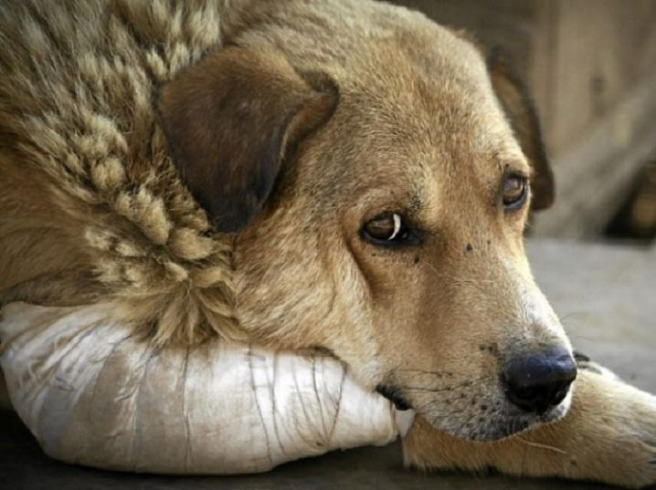 """""""У собак були вибиті очі"""": Під Києвом невідомі розстріляли притулок для тварин"""