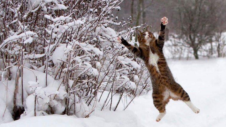Готові? Синоптики оприлюднили прогноз погоди на найближчі дні, тільки тримайте себе в руках