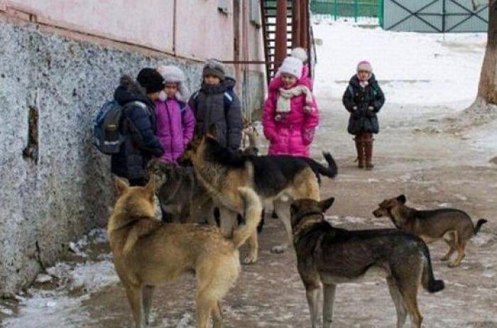 """""""Коли дитина поверталась зі школи"""": Зграя бродячих собак розтерзали 6-річну дівчинку"""