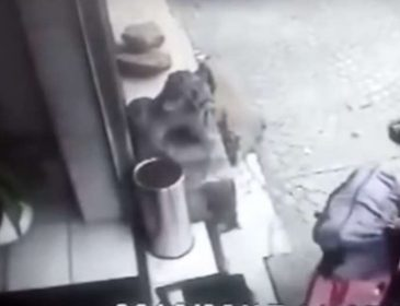 """""""Тіло знайшли через 8 днів…"""": Хлопець задушив власну дівчину і виніс у валізі"""