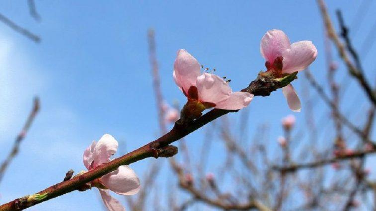 Примхлива весна: Синоптики розповіли, якої погоди чекати завтра