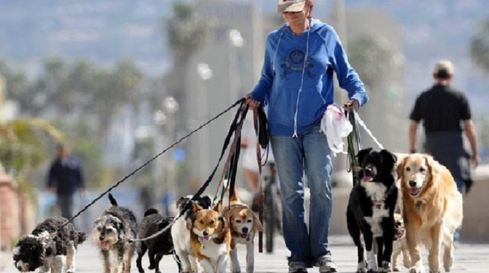 """""""Штрафи, заборони та обов'язкова реєстрація"""": Новий закон, який сильно ускладнить життя власників домашніх тварин"""