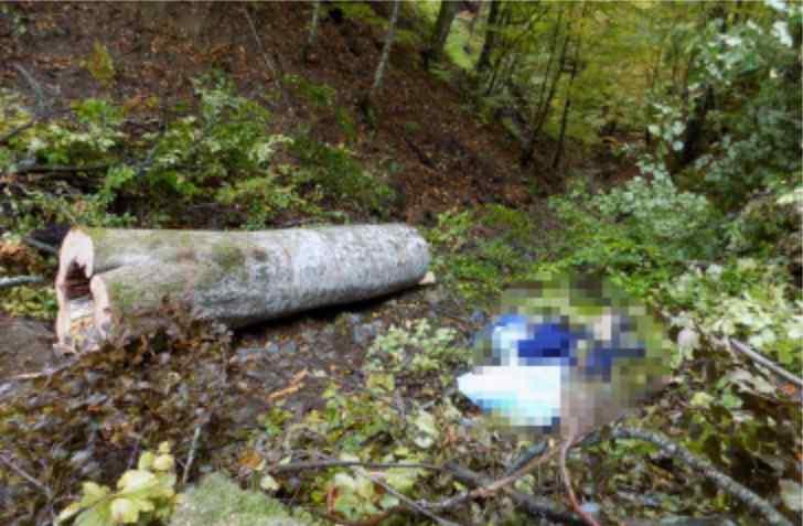 """""""Зловив її в лісі і згвалтував…"""": Батько потерпілої затримав гвалтівника своєї доньки"""