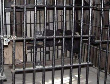 """""""Була замкнена в клітці з переповненим дитячим горщиком"""": Батьки тримали в рабстві 18-річну дочку"""