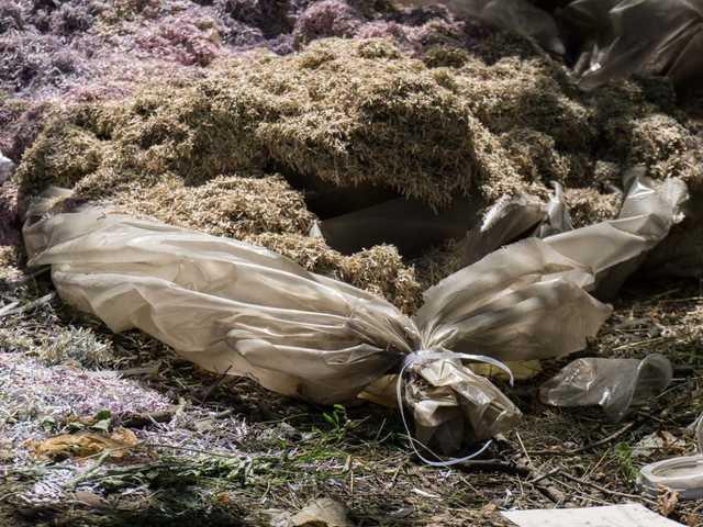 """""""Десять мішків з українськими купюрами"""": У лісопосадці біля Дніпра знайшли приголомшливу знахідку"""