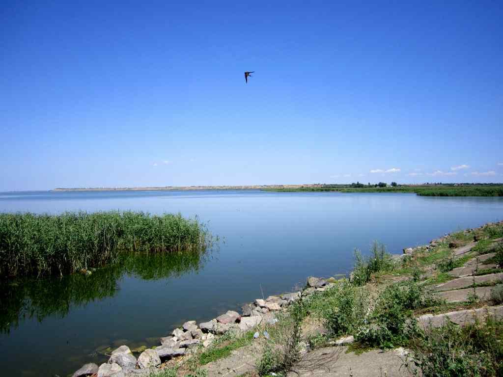 """Він переносить чуму"": В українських озерах виявили небезпечну істоту"