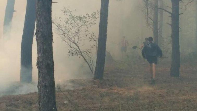 Площа займання сягнула вже 3 гектарів: В Україні спалахнув ліс, гасіння триває декілька годин