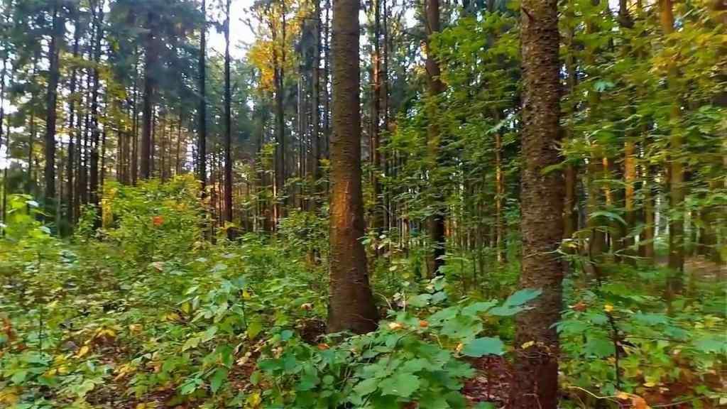 Пропав більше ніж тиждень тому: На Закарпатті знайшли українця, який загубився у лісі