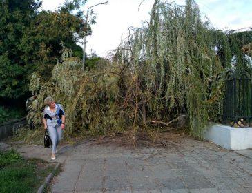 """Повалені дерева та розтрощені зупинки: у Львові штормовий вітер """"наробив біди"""""""