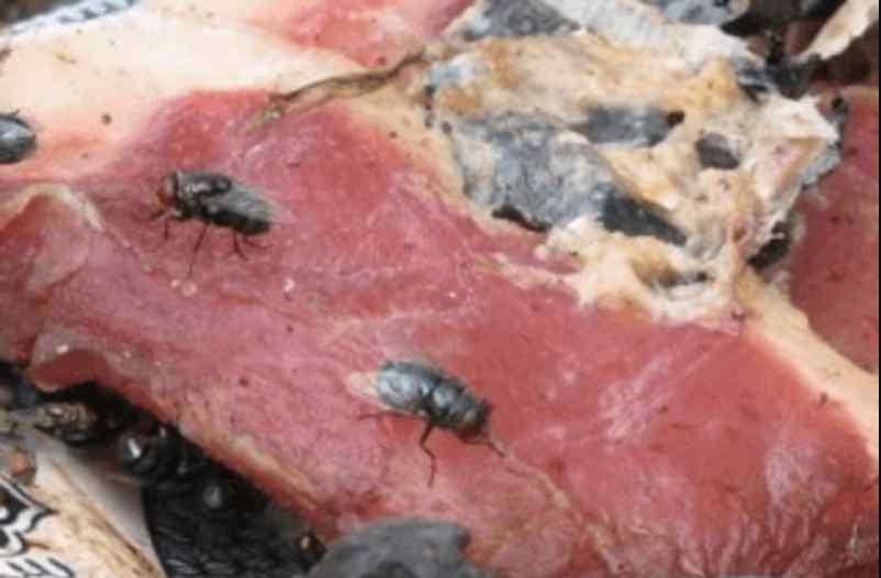 Хотіли нагодувати дітей гниллю: у дитячі садки Києва постачали несвіже м'ясо