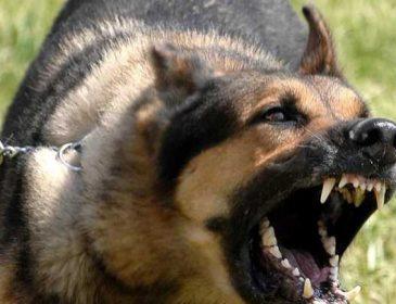 Трагедія в Харкові: на маленьку дитину накинулася навіжена собака