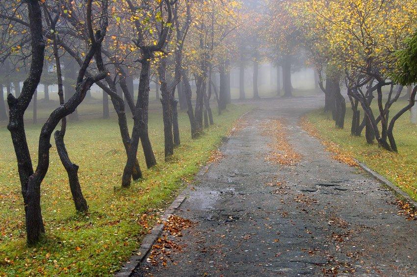 До України наближаються холод та дощі: Синоптики дали прогноз на 21 жовтня