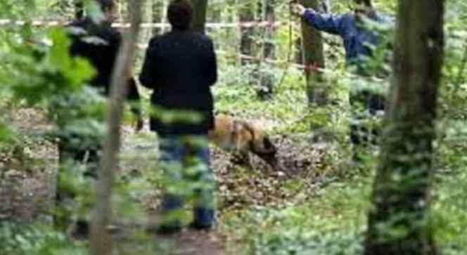 Дитину розшукували від вчорашнього вечора: На Харківщині в лісосмузі виявили поранене тіло школярко