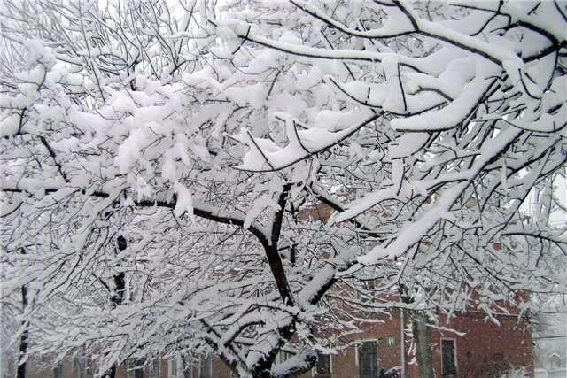 """Невеликий """"мінус"""" та сніг із дощем: Прогноз погоди на 16 січня"""