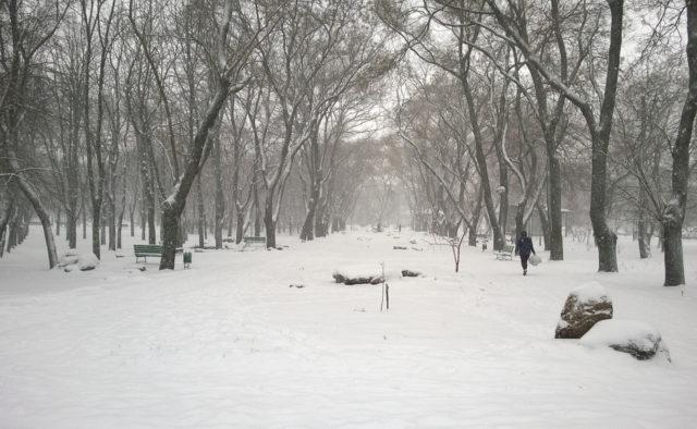 Тіло молодого хлопця виявлено в одеському парку: перші подробиці трагедії