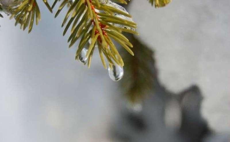 Зима продовжує дивувати: Прогноз погоди на 4 лютого