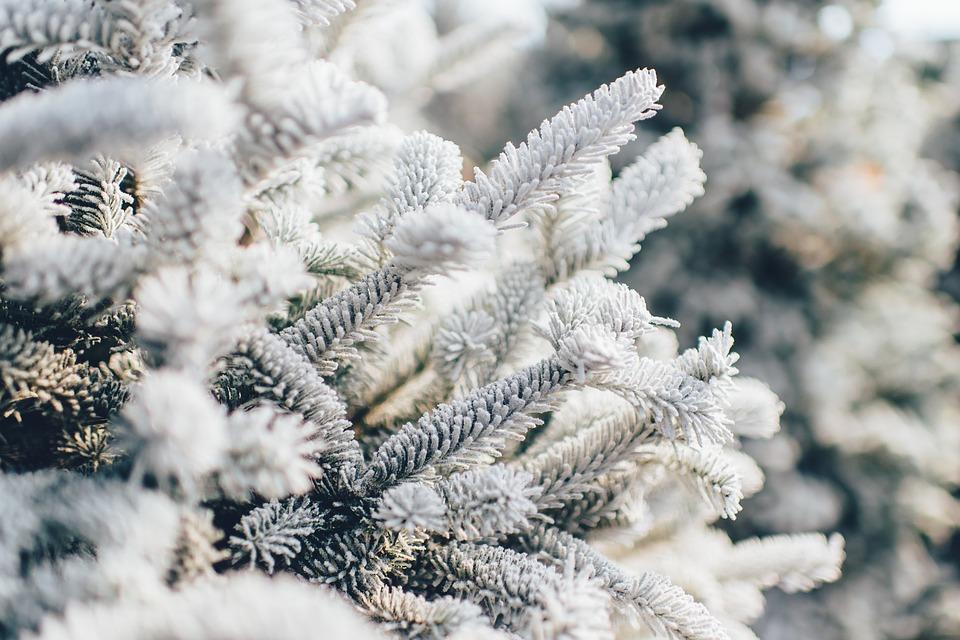 Зима повільно повертається в Україну: Прогноз погоди на 5 лютого