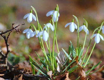 Справжня весна: Синоптики завтра прогнозують найтепліший день березня