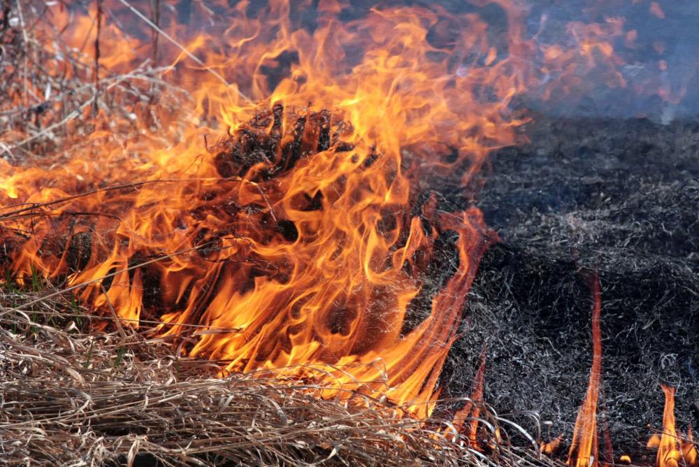 Хотіли спалити траву біля хати: На Житомирщині літнє подружжя згоріло живцем під час паління сухостою