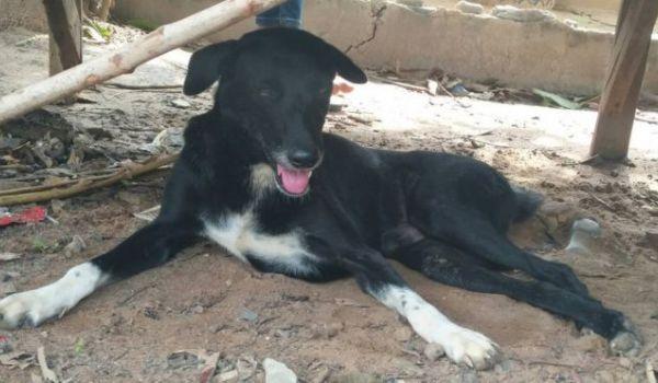 15-річна мати приховала вагітність: триногий пес врятував поховану заживо новонароджену дитину
