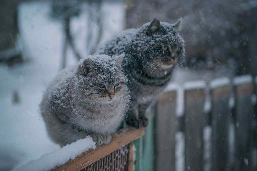 """Лютий мороз та мокрий сніг : """"суворий"""" прогноз погоди на вихідні"""