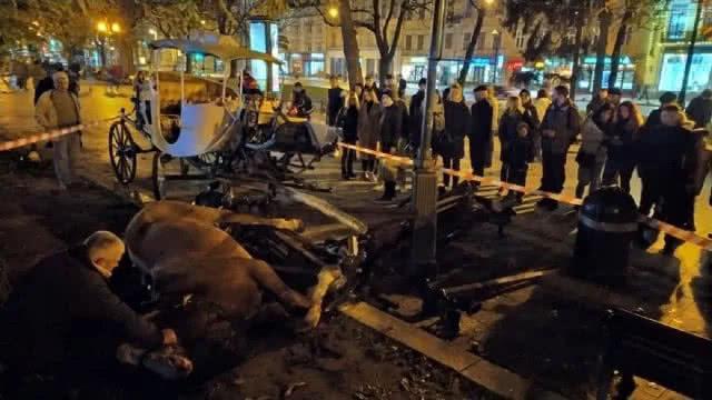 Валялася з роздробленими кістками: переляканий кінь напав на львів'янку в центрі міста. Страшні кадри шокують!