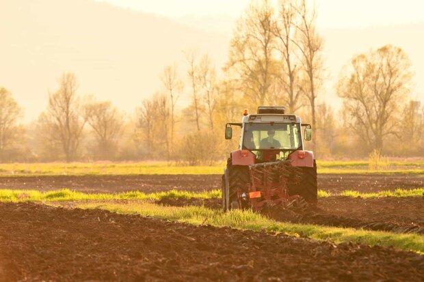 """""""В середньому $2200"""" : У Кабміні назвали вартість гектара після відкриття ринку землі"""