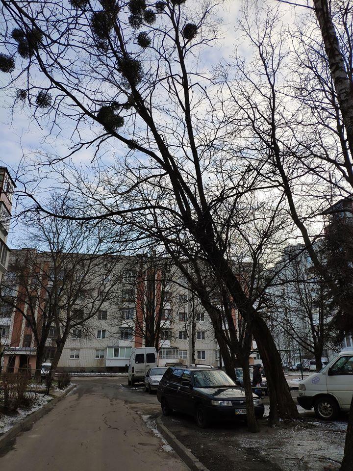 #СадовийвідремонтуйЛьвів: дерево сильно нахилене. Чекають доки впаде?